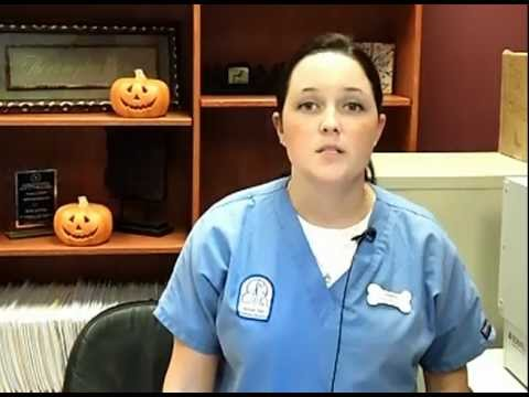 Veterinary Receptionist, Career Video From drkit.org