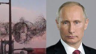 Портрет Путина в Нью-Йорке / Strange behavior of birds New York