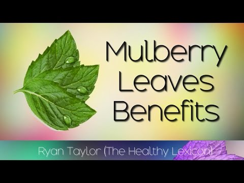 Video Mulberry Leaves: Benefits (Tea)