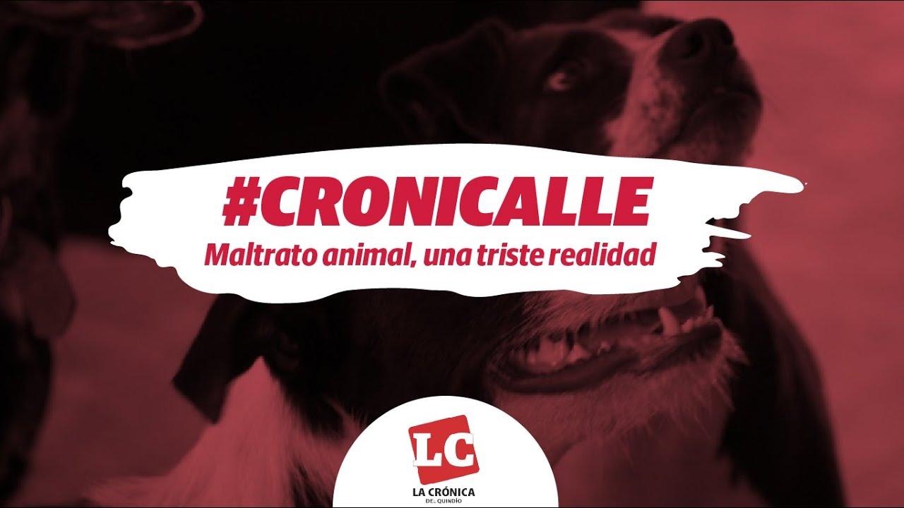 #Cronicalle | Maltrato animal, una triste realidad