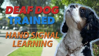 Deaf Dog Training | Beginning Steps of How to Train a Deaf Dog