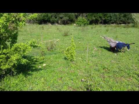 Come catrame di betulla per guarire la psoriasi