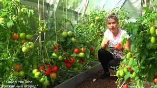 урожайный огород татьяны йод для рассады баклажан