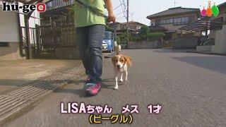 【きょうのわんこ】LISAちゃんがお散歩から帰ってきてする楽しみな事とは?