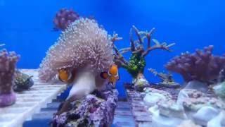 El acuarismo marino costarricense