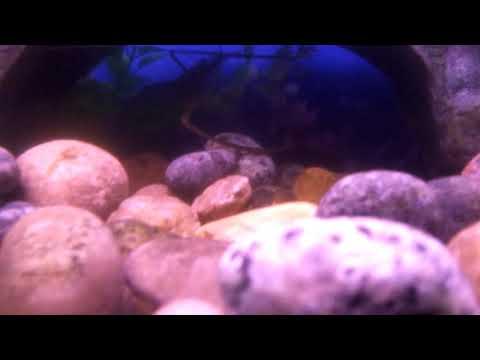 Under the sun fish aquarium gallery.  Biggest fish aquarium gallery of india part 1