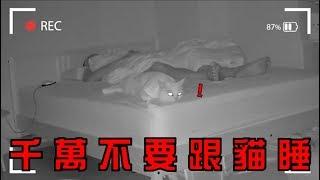 【豆漿 - SoybeanMilk】千萬不要跟貓咪一起睡