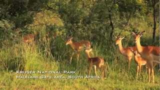 Kruger National Park, South Africa - GoHop.ie - Unravel Travel TV