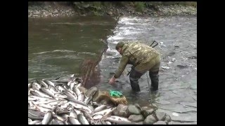 Где ловится красная рыба в россии