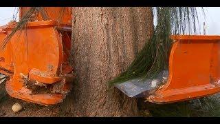 Прореживание леса режущей головкой