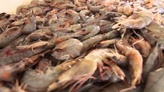 Behind the Scenes: The Gulf Coast Shrimp Industry