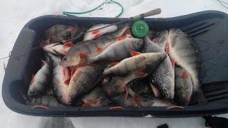 Зимняя рыбалка на окуня в ульяновске