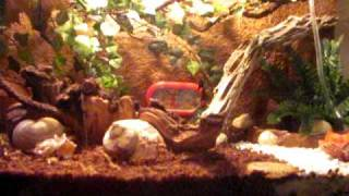 Hermit Crab Care and Setup