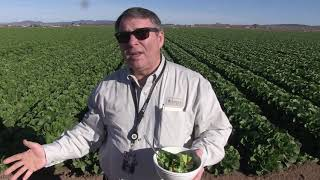 Director enjoys leafy greens at Yuma farm