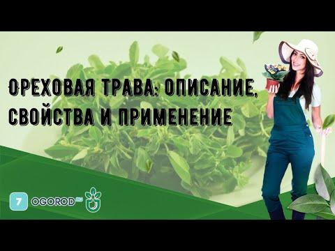 Ореховая трава: описание, свойства и применение