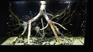 215l - Flooded forest in Amazon - Oman