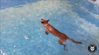 Piscine : Le Dog Pool du Dog Center !