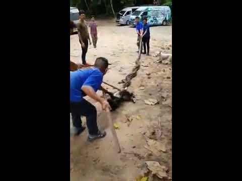 Dog ask for human help