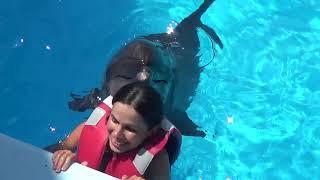 Плавание с дельфинами. Абсолютный кайф. Дельфинарий Оскар. Генгорка. Арабатская стрелка.