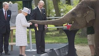 """Слоны """"в восторге"""" от Banana тащил королевы Елизаветы"""