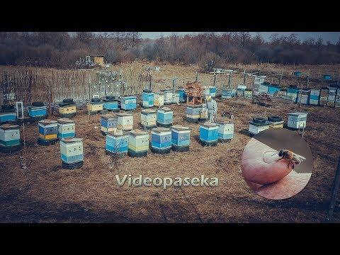 Зимующие трутни и другие весенние фишки в пчеловодстве