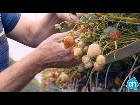 Naast ons 'Beter voor'- programma zijn we dagelijks bezig ons groente- en fruitassortiment te verbeteren waar mogelijk. Bekijk het in de video.
