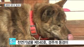 용맹한 경주개 '동경이 171231[TBC - 띠비띠]