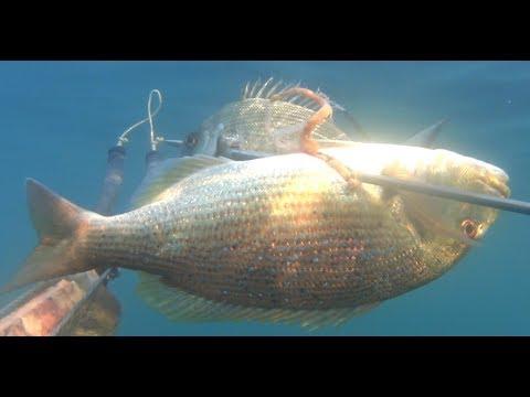 Soldi infiniti per la pesca russa