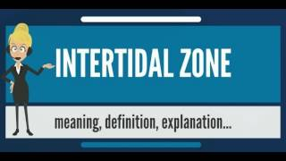 What is INTERTIDAL ZONE? What does INTERTIDAL ZONE mean? INTERTIDAL ZONE meaning & explanation
