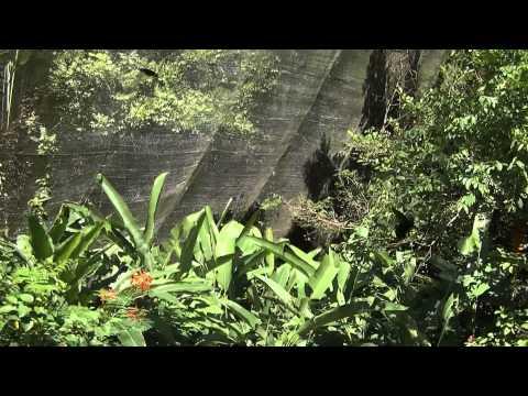 Das Schnellkraut das Biogel sustamed beim Ekzem