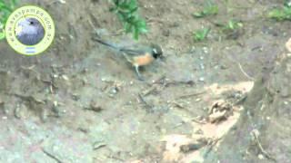 preview picture of video 'Pepitero Chico'