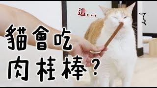 【黃阿瑪的後宮生活】貓會吃肉桂棒?