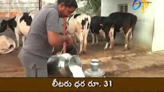 Success story of Dairy Farming : Warangal farmer's experience.
