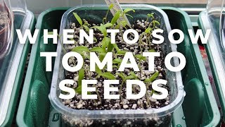 When to sow Tomato Seeds?