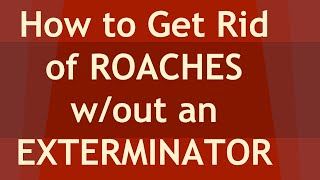 7 Tips on How to get rid of Roaches without an exterminator