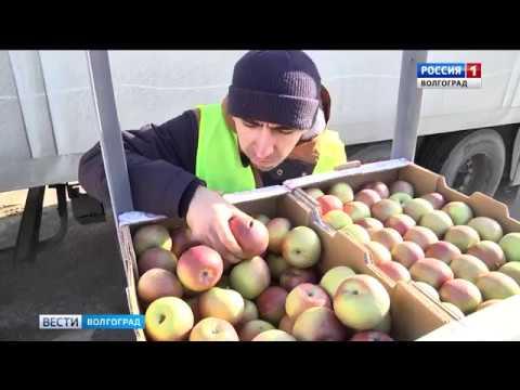 Специалисты Россельхознадзора осуществляют контроль ввозимых в Волгоградскую область импортных фруктов
