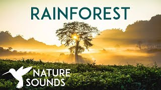 10 HOURS of Rainforest Sounds ~ Relaxing Nature Sounds for Sleep, Study, Meditation & Yoga