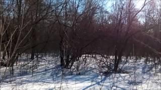 Апрель  Солнце  Пение птиц