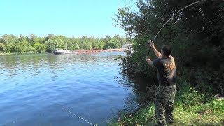 Река москва клев рыбы