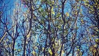 Breeze Highfields Country Park