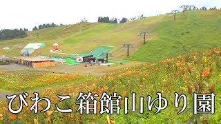 【びわ湖源流の郷・高島市より】びわこ箱館山ゆり園