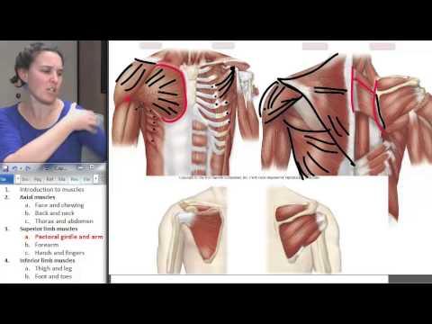 Pourquoi se voilent les muscles de la main