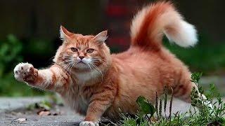 ТОПовые приколы с котами и кошками/смешные коты и кошки/лучшие приколы с котами и кошками)
