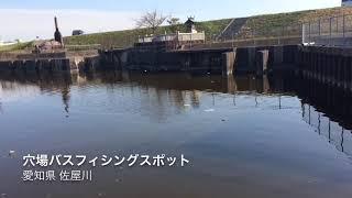 佐屋川穴場バスフィシングスポット愛知県ブラックバス