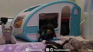 Aura's graceful dismount from the clown-camper - TinyKittens.com - Video Youtube