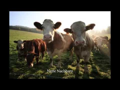 Recklinghausen singles
