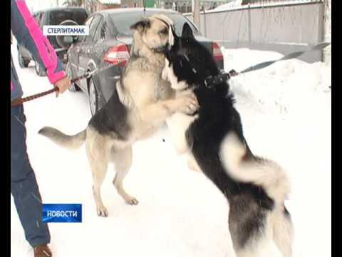 Репортаж о государственной ветеринарной клинике Стерлитамака