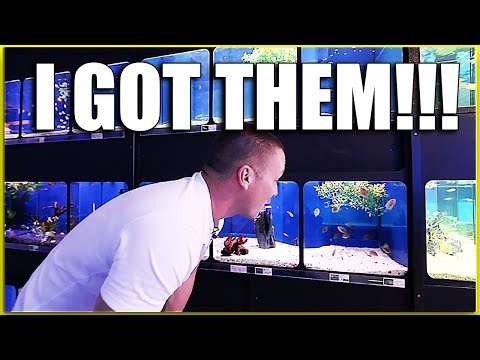 I waited 10 YEARS to buy these fish!!!