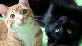 Котята и  щенята😊