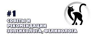 #1 Уход и содержание кошек  Советы фелинолога